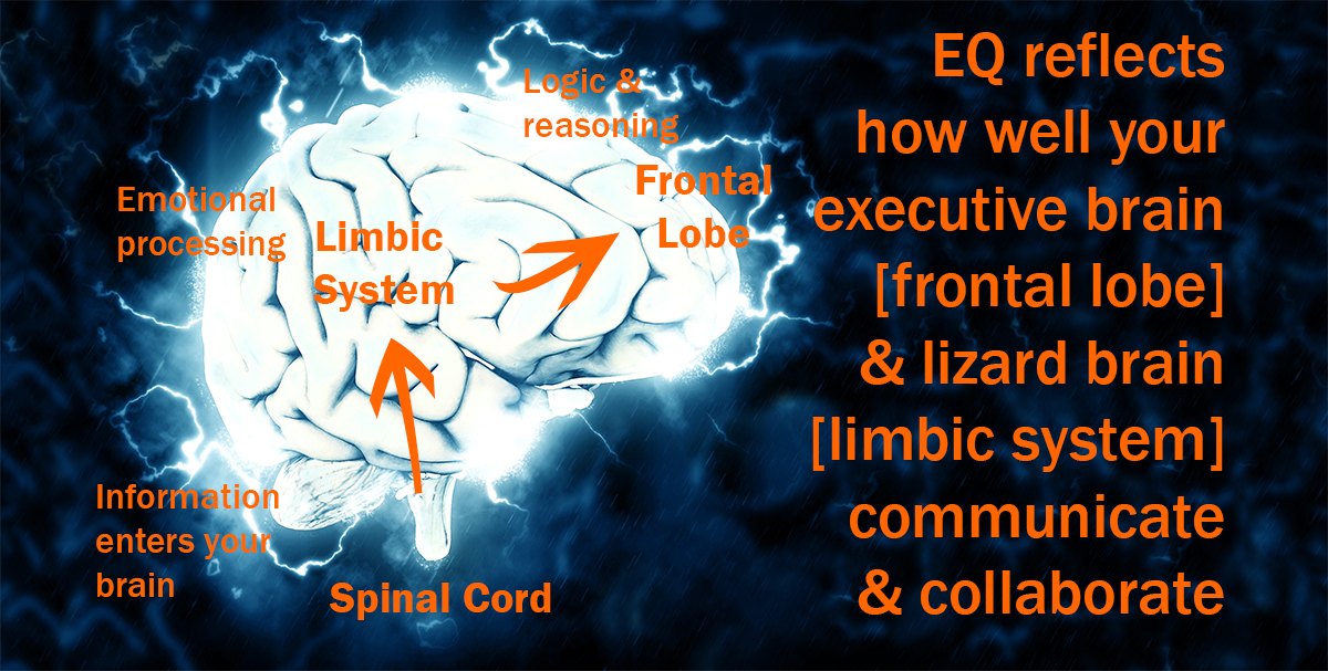 EQ reflects the quality of your limbic system's interaction with your frontal lobe. Illustration by Diana K. Anderson using 'Electric Brain' image by Pete Linforth (Pixabay).