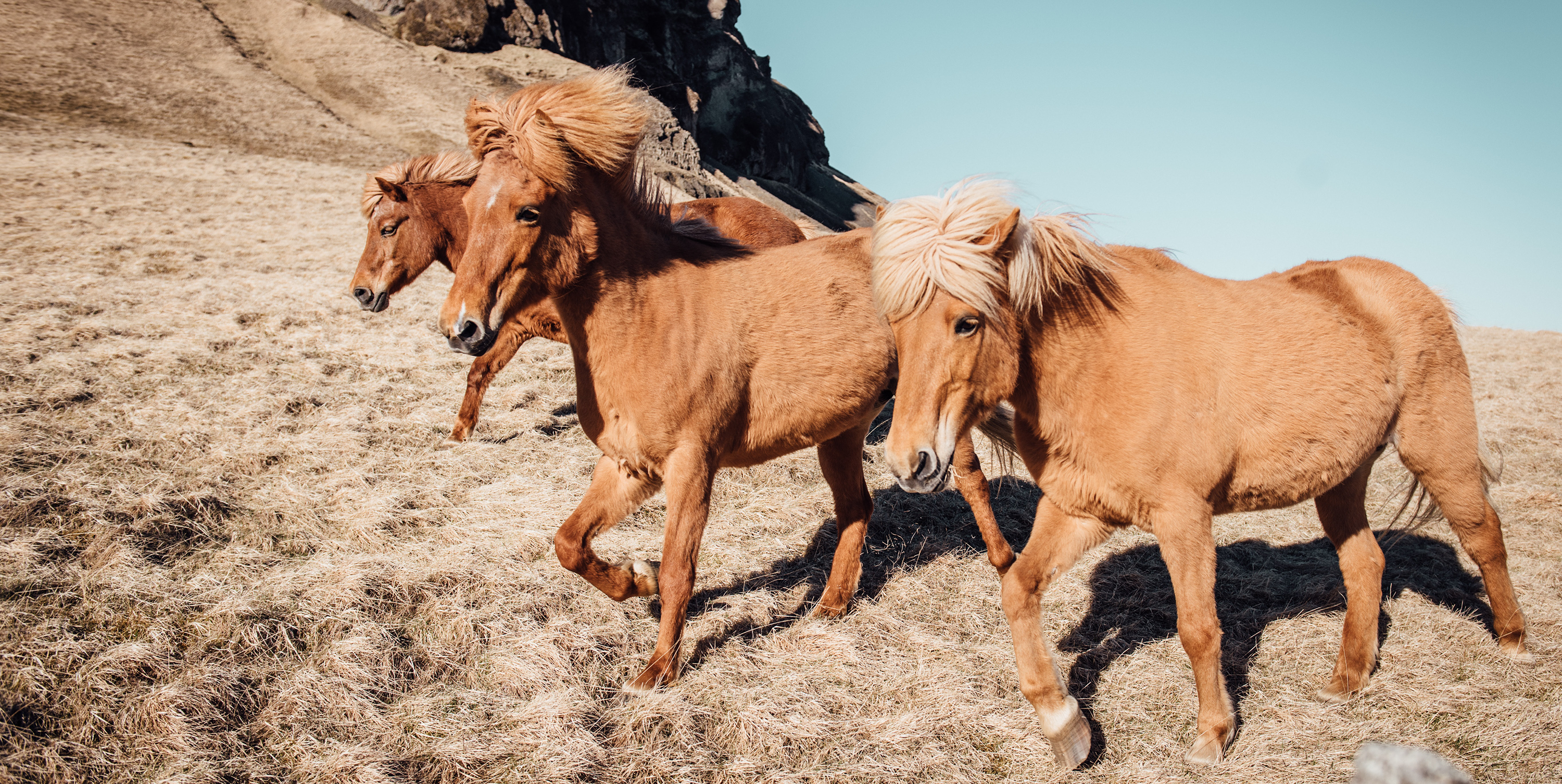 Ditch the certainty blinders. Horses run free on a mountain. From Upsplash by alice-donovan-rouse-ivObfp8F4rg