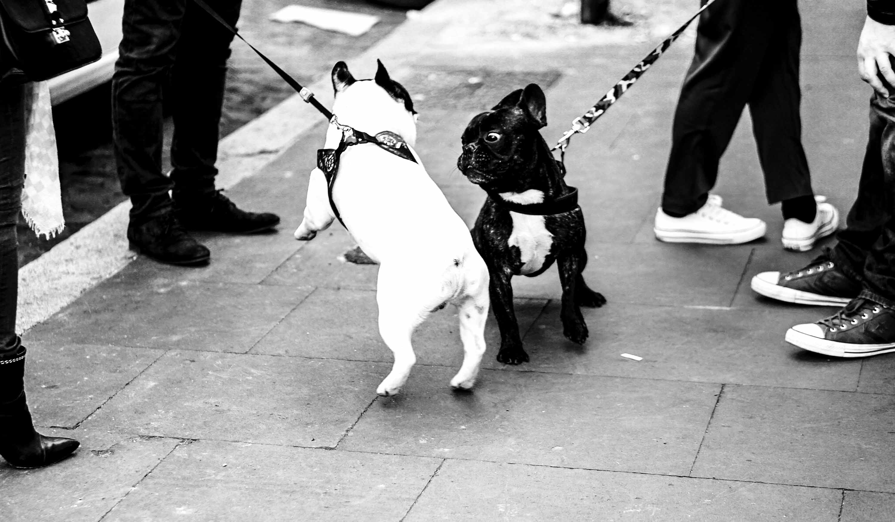 leashed-dogs-hipster-feet Photo credit to Filip Mishevski via Unsplash (su_-0-UpP0M)